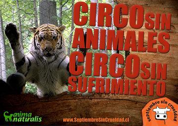 LOS VERDES PIDE QUE NO INSTALEN CIRCOS CON ANIMALES